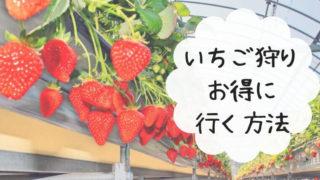 strawberry-picking-jalan
